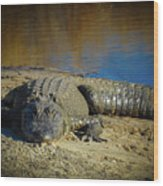 I Am Gator, No. 60 Wood Print