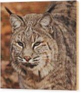 I Am One Good Looking Bobcat Wood Print