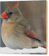 I Just Can't Resist The Beauty Of A Cardinal In The Snow Wood Print