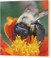 I Like Pollen  Wood Print