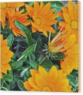 I Love Orange Flowers Wood Print