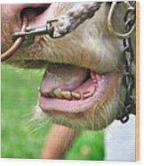 I Need To See My Dentist Wood Print by Kaye Menner