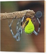 I See You Spider Wood Print