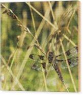 I Spy A Dragonfly Wood Print