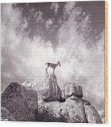 Ibex -the Wild Mountain Goats In The El Torcal Mountains Spain Wood Print