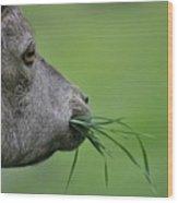 Ibex Wood Print
