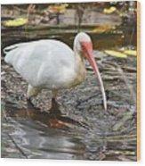 Ibis At Corkscrew Swamp Wood Print