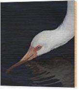 Ibis Drinking Wood Print