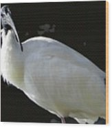 Ibis Wood Print