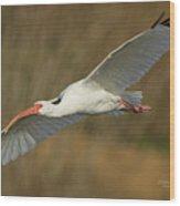 Ibis Glide Wood Print