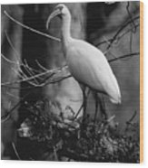 Ibis In Black And White  Wood Print