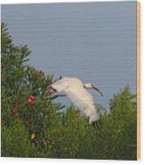 Ibis In The Oleander Wood Print