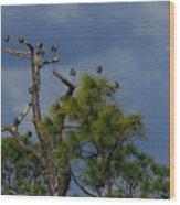 Ibis In The Pines - Debbie May Wood Print