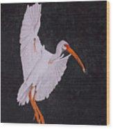 Ibis Landing Wood Print