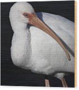 Ibis Pose Wood Print