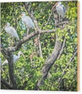 Ibises In A Tree Wood Print