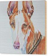 Ibizan Hound Wood Print