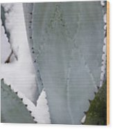 Ice Blue Agave Wood Print