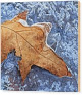 Ice-bound Leaf Wood Print
