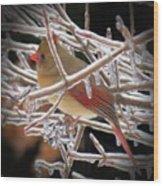 Ice Cage - Female Cardinal Wood Print