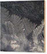 Ice Crystals Form Feather Shapes On Ice Wood Print