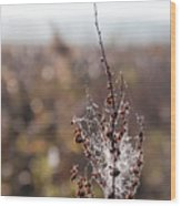 Ice Crystals On Dried Wild Flower Wood Print