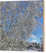 Ice Laden Birches Wood Print
