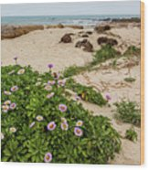 Ice Plant Booms On Pebble Beach Wood Print