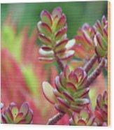 California Red Tip Crassula Ovata Jade Plant Wood Print