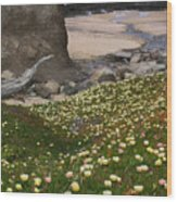 Ice Plants On Moss Beach Wood Print