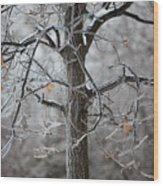 Ice Tree Wood Print