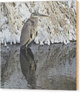 Iced Heron Wood Print