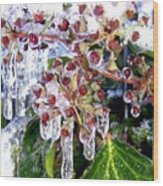 Iced Ivy Wood Print