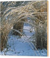 Iced Ornamental Grass Wood Print