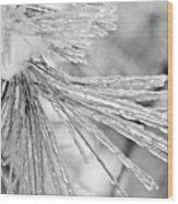 Iced Pine Needles Wood Print