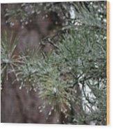 Iced Pine Wood Print
