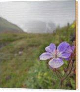 Iceland 35 Wood Print