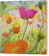 Iceland Poppies Wood Print