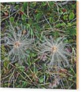 Icelandic Flora Wood Print