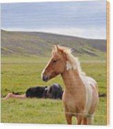 Icelandic Horse Wood Print