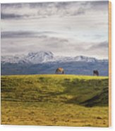 Icelandic Horses On The Countryside  Wood Print