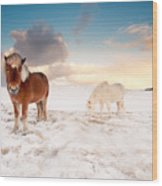 Icelandic Horses On Winter Day Wood Print by Ingólfur Bjargmundsson