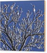 Icey Sparkle Wood Print