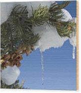 Icicles On Pine Tree Wood Print