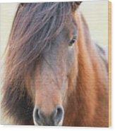 Iclelandic Horse Close Up Wood Print