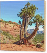 Iconic Southwest Wood Print