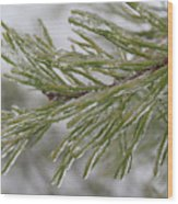 Icy Fingers Of The Pine Wood Print