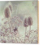Icy Morning. Wild Grass Wood Print