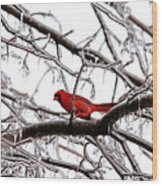 Icy Perch Wood Print