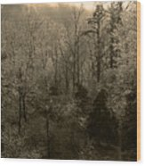 Icy Trees In Sepia Wood Print